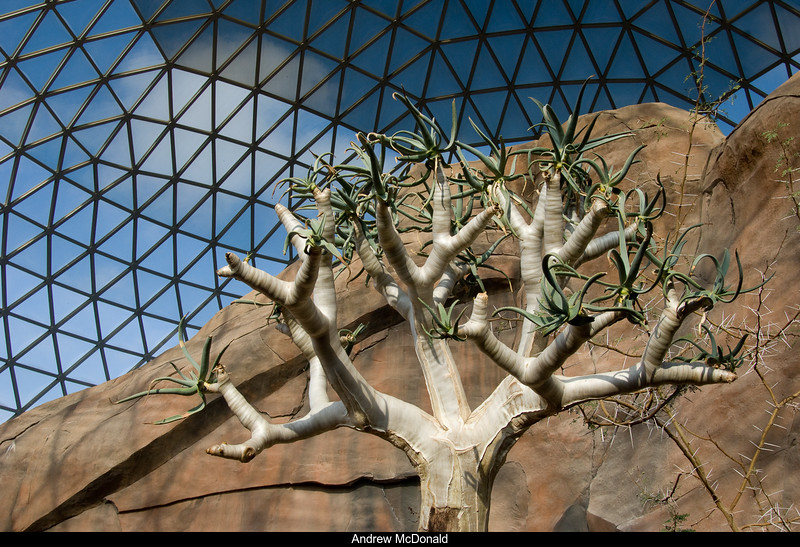 Tree and Desert Dome