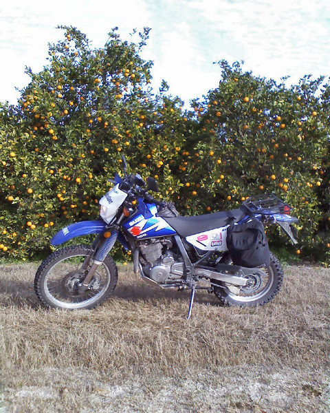 """""""First is my 2003 Suzuki DR650 (the Mighty DR) stopped in front of one of many orange groves. Second is the same bike on a country dirt road. Both shots taken while riding an Adventure route prepared by Dixie Dual-Sport ( <a href=""""http://www.dixiedualsport.com"""">http://www.dixiedualsport.com</a>). Location: Near the Withlacoochee State Forest and surrounding areas, Florida."""" - Tom Batchelor of Brandenton, Fla."""