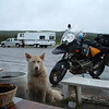 """""""On the Alaska Highway, two tired and wet mutts taking a breather."""" - Michael Pisula of Pittsburgh."""