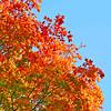 Joseph Hill_Autumn Tree