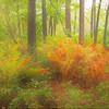 Cathy Locklear_Autumn Forest Floor