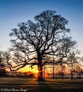 Sunrise by the Tree