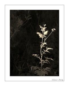 Plant Life Liffey