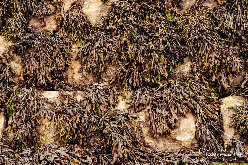 The Seaweeds Glin