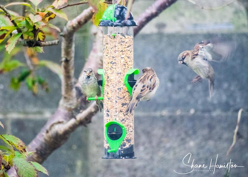 Kilbelin Birds