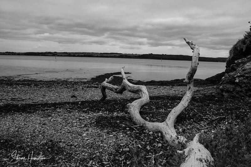 Log on Beach in Foyne