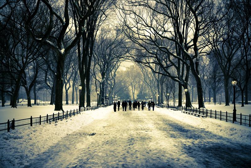 NY Trees