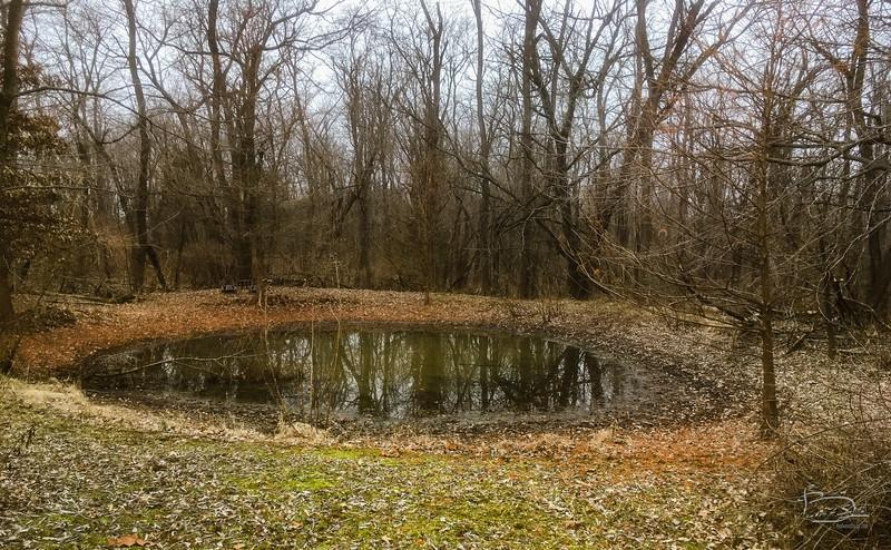 Pond resting