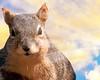 Squirrel at Sunset