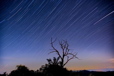 Star Trails on Black Balsam Knob