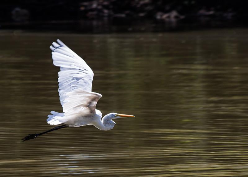 Taken along the Little Arkansas river by Riverside park.