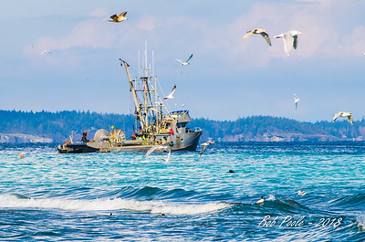 Herring Fishing