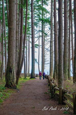 Rathtrevor Forest