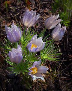 L2-CLR-J Berthman-Prairie Spring Bouquet