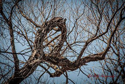 S117-Bob Poole-CabinFever5-Circle of Nature