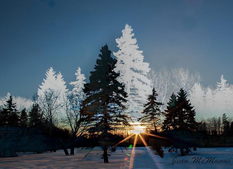 JEan McManus 9903 ghost trees.jpg