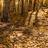 Laura Pratt,   Autumn Gold