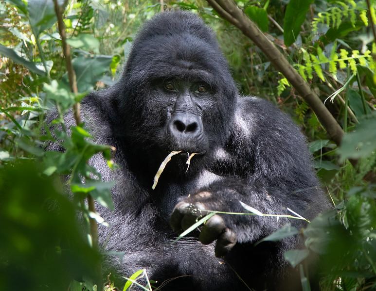 Gary Bicker,   My name is Kong, King Kong