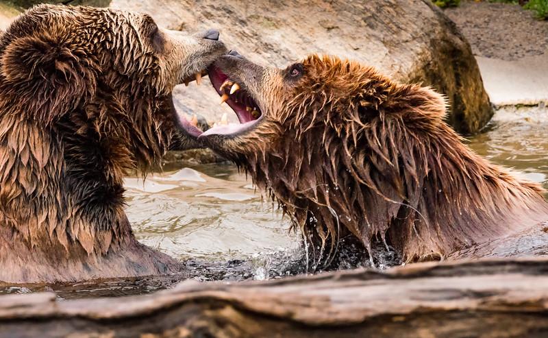 Mark Elder,   Grizzly Scene