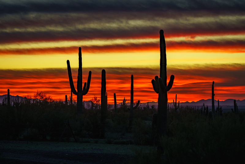 Bob Kenney,   Sonoran Sunset