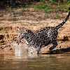 Pam Holmes,   Jaguar Splash