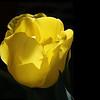 "Diane Hendler,   ""A Pocketful of Sunshine"""