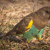 Mark Elder,   Brown Parrot