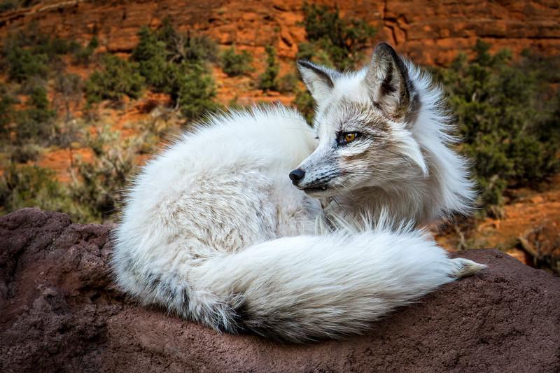 Roger Kiel,   High Desert Fox