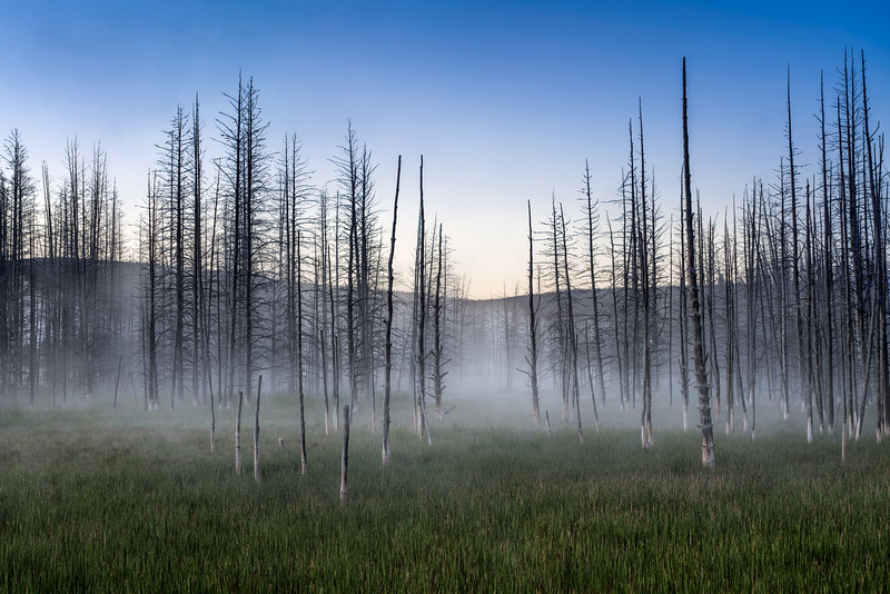 Elaine Belvin,   Charred Trees in the Mist
