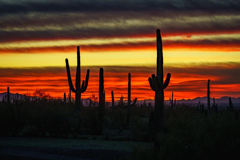 Bob Kenney,   Sonoran Sunset