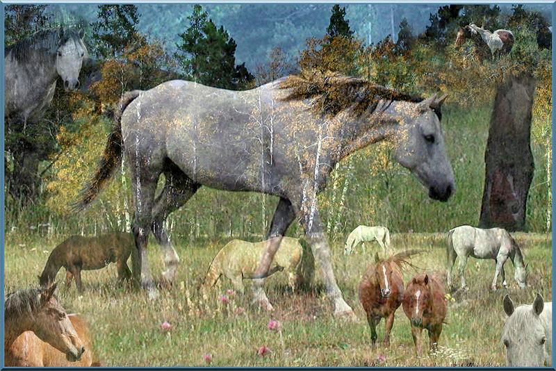 Lynda McEvoy,   Mystical Horses in Her Dreams