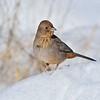 Joanne Sigrist,   Snowbird