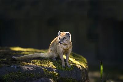 Image by Stefan Rychlowski