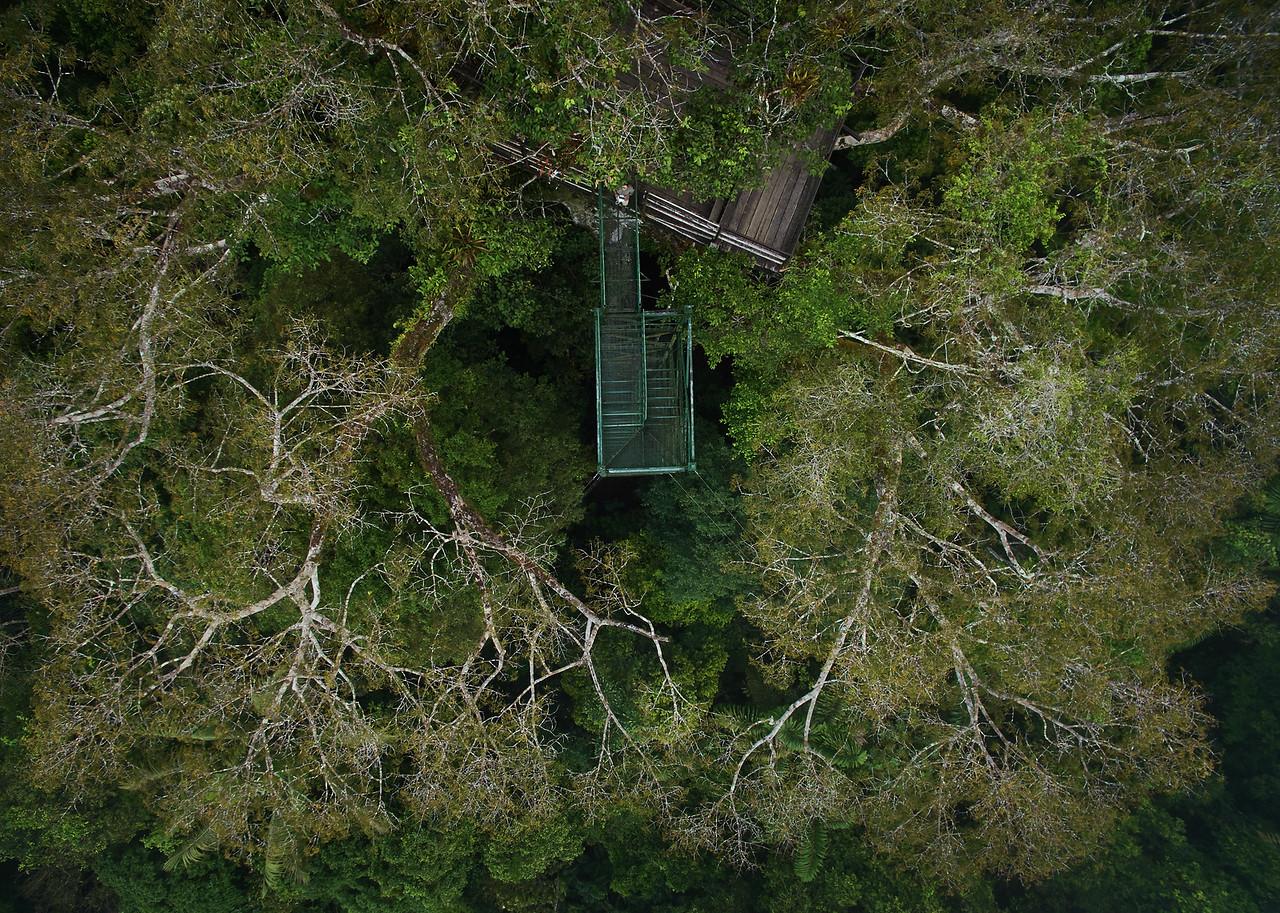 Photo from Sani lodge bordering Yasuni national park, Ecuador. Copyright Paul Bertner 2016.