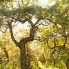 18 Crooked Bush aspen tree grove near Hafford SK