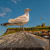 A Gull's Eye View