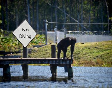 No Monkeying Around! Bruce Smith
