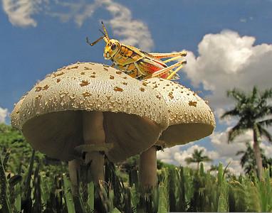 Mushrooms with Locust Bruce Smith