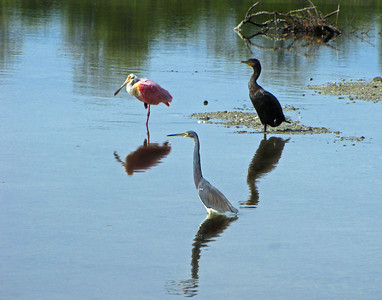 Three Birds Bruce Smith