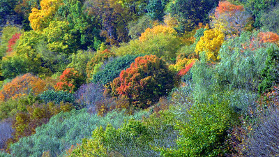 Nature's Palette Bruce Smith