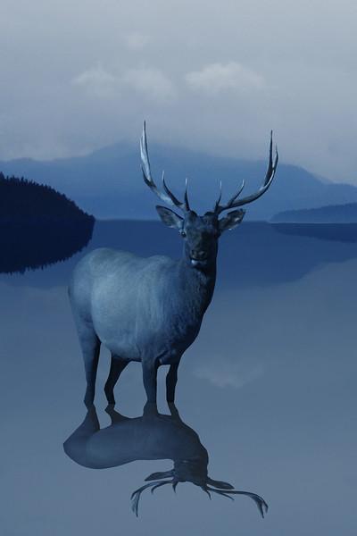 2-NA-Elk Reflection-Dale Read