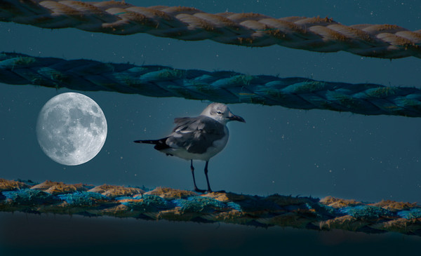 Night Gull by Danny Haddox