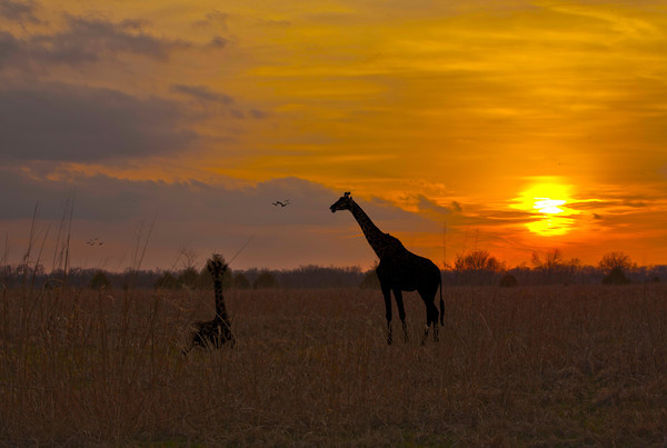 African Sunset by Danny Haddox