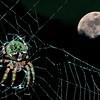 Shady Lake Spider