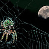 Shady Lake Spider