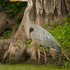 Uncertain Heron #2