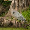 Uncertain Heron #2