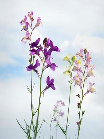 Wild Flowers - Pictorial<br /> Score 12<br /> Dwayne Anders
