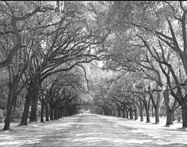 Lane in Savannah  11X14