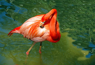 West Palm Beach Zoo
